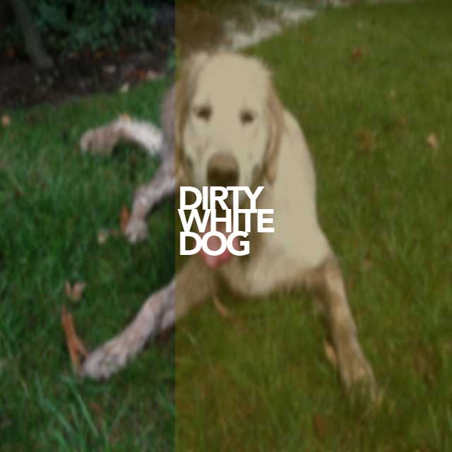 Ryan Young - Dirty White Dog